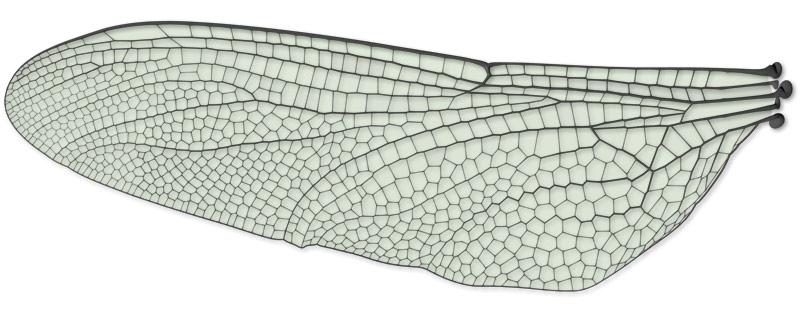 곤충의 날개 패턴