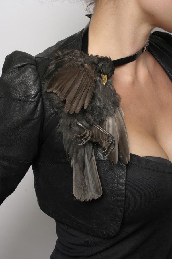 BirdSp2 - Julia de Ville